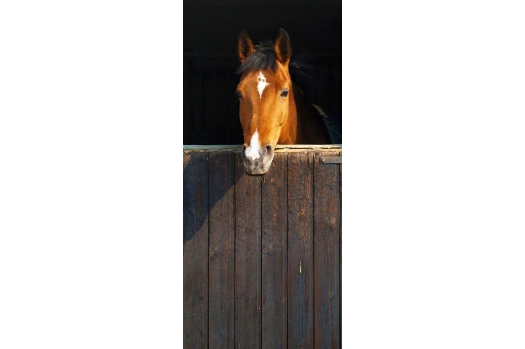 1Wall 1Wall fototapeta Kůň 95x210 cm