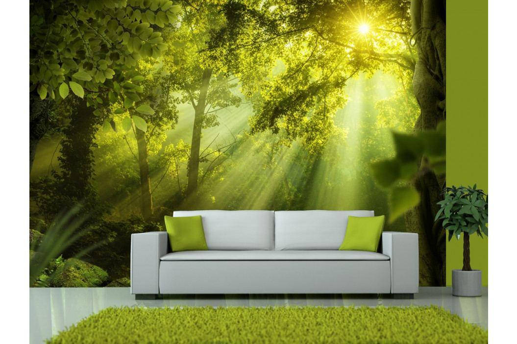 *Tapeta tajemství lesa (200x140 cm) - Murando DeLuxe