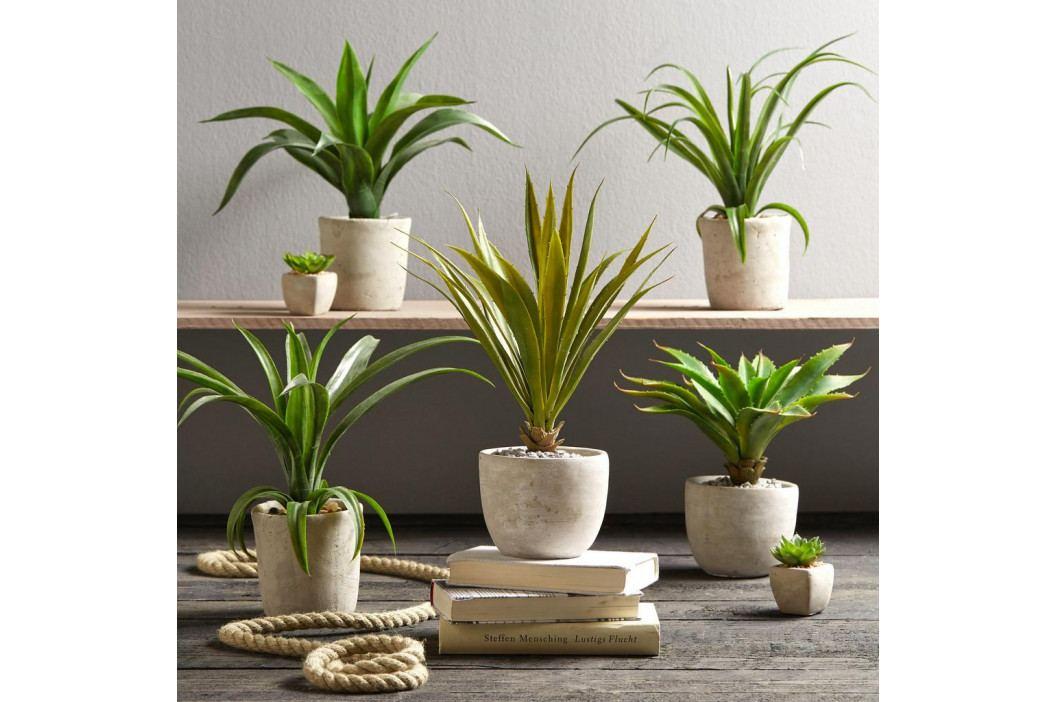 Rostlina Umělá Agave I