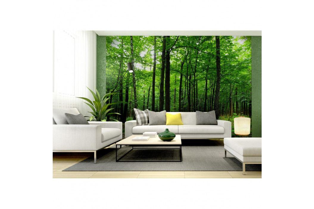 AG Art Fototapeta XXL Les 360 x 270 cm, 4 díly