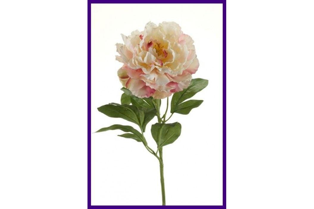Emerald květiny - Pivoňka krémová/nafialovělá, 65cm - Prémiová řada (416101)