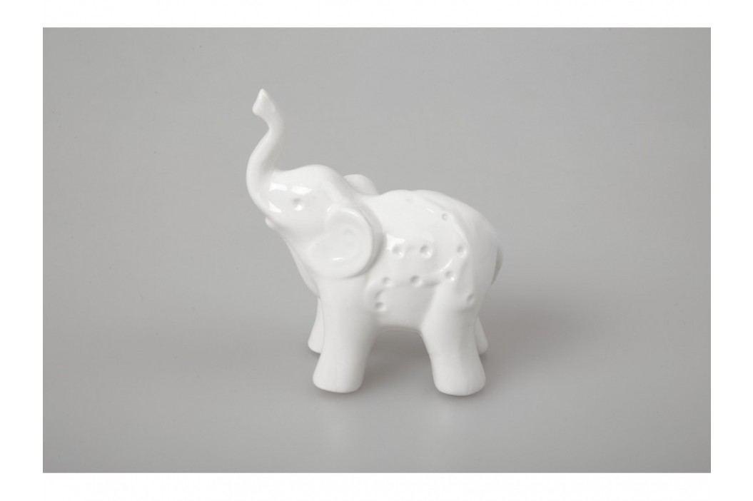 Slon bílý
