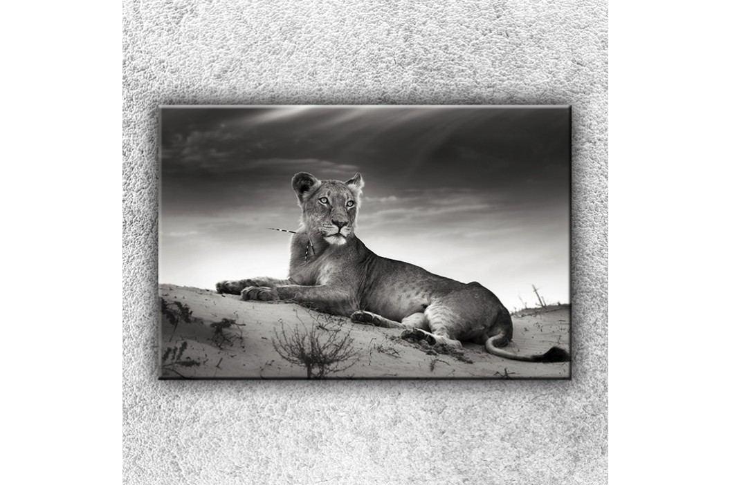 Ležící lev 1 (120 x 80 cm) -  Jednodílný obraz