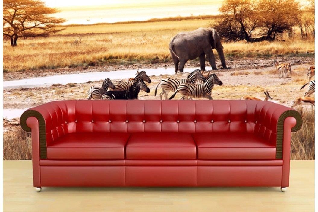 Safari (126 x 95 cm) -  Fototapeta na zeď