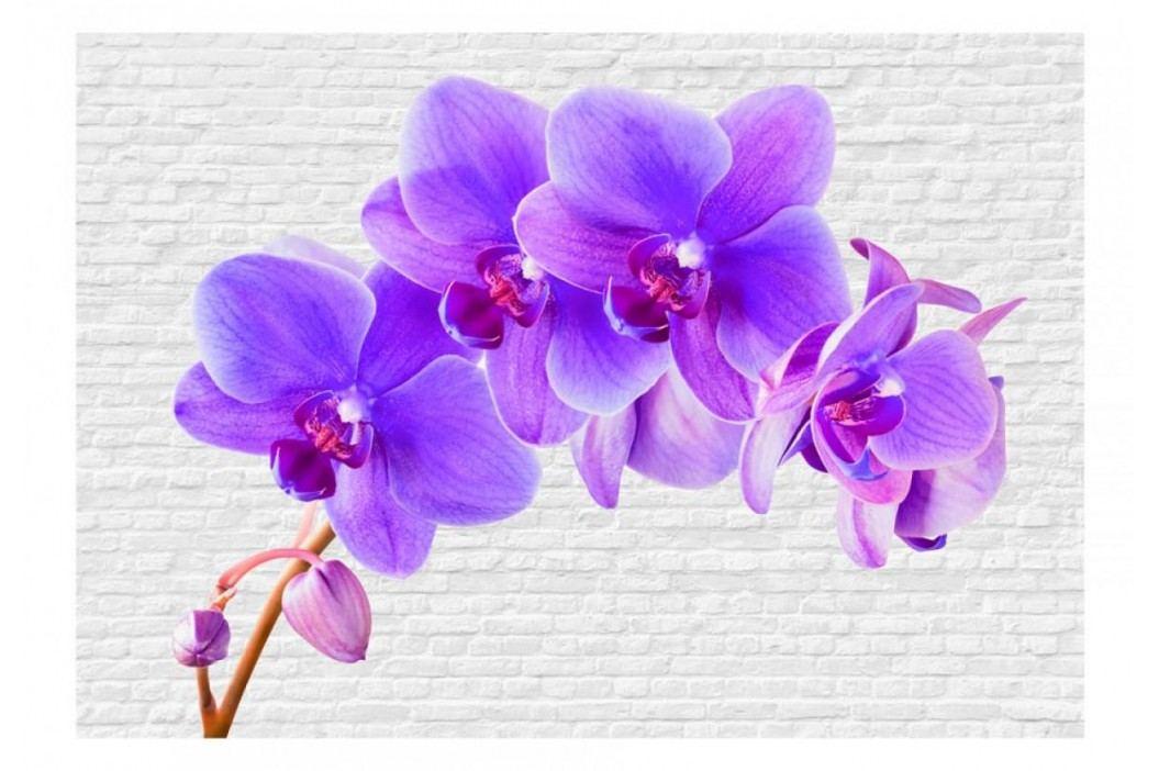 Murando DeLuxe Fototapeta lila orchidej 150x105 cm