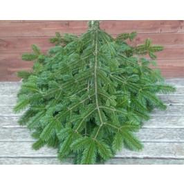 Živý, řezaný Vánoční stromek Chvojí malé / Chvojí jedlové - svazek malý (5 půlmetových větví)