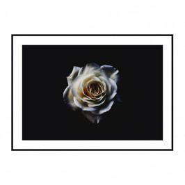 Obraz - WHITE ROSE, 500x700 mm WHITER-500x700 Artylist
