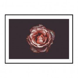 Obraz - PINK ROSE, 297x420 mm ROSE-297x420 Artylist