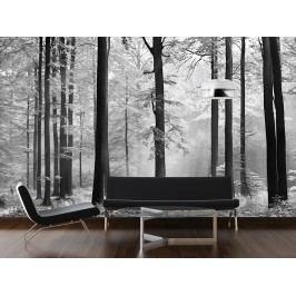 Wizard+Genius W+G fototapeta Černobílý les 366x254 cm