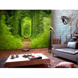 *Fototapeta Zelený špalír (250x175 cm) - Murando DeLuxe