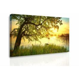 * Obraz na stěnu - strom (150x100 cm) - InSmile ®