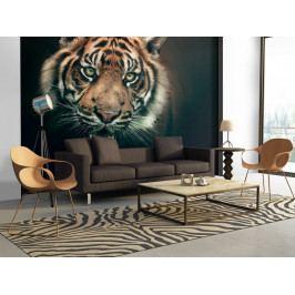 *Tapeta tygr bengálský (200x154 cm) - Murando DeLuxe