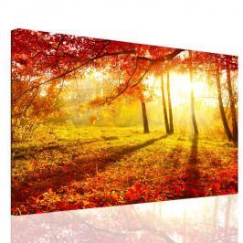 Obraz lesní záře (90x60 cm) - InSmile ®