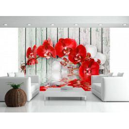 *Rubínová orchidej (200x140 cm) - Murando DeLuxe