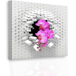 InSmile ® Luxusní obraz - orchidej Velikost: 60x60 cm