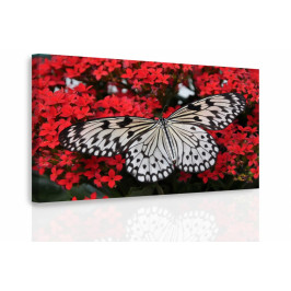 InSmile ® Obraz - Černobílý motýl Velikost: 120x80 cm