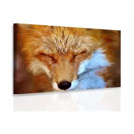 InSmile ® Obraz - Liška Velikost (šířka x výška): 60x40 cm