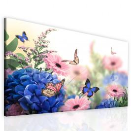 InSmile ® Obraz motýlí život Velikost: 150x90 cm