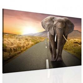 InSmile ® Obraz na stěnu - slon v krajině Velikost: 90x60 cm