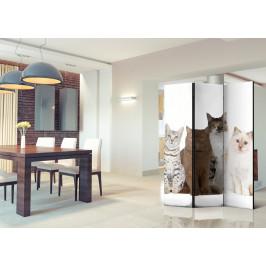 Murando DeLuxe Paraván sladké kočky I Velikost: 135x172 cm