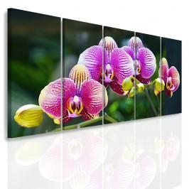 InSmile ® Vícedílný obraz - Divoká orchidej Velikost: 150x70 cm