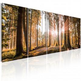 Murando DeLuxe Vícedílný obraz - les v tajemství Velikost: 225x90 cm
