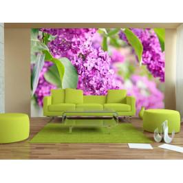 Murando DeLuxe Květy šeříku Rozměry (š x v) a Typ: 147x105 cm - samolepící