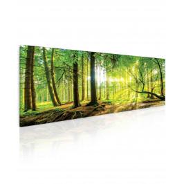 InSmile ® Obraz slunce v lese Velikost (šířka x výška): 70x30 cm