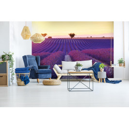 InSmile ® Tapeta Večerní levandulové pole Vel. (šířka x výška): 144 x 105 cm