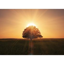 InSmile ® Tapeta Západ slunce Vel. (šířka x výška): 144 x 105 cm