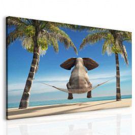 Vtipný slon na pláži (50x40 cm) - InSmile ®
