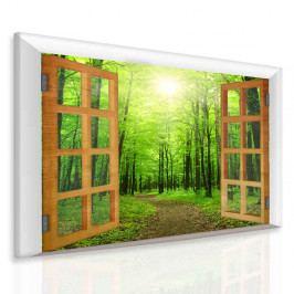 Obraz paprsek v zeleném lese (50x40 cm) - InSmile ®