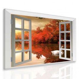 Obraz Labuť za oknem (50x40 cm) - InSmile ®