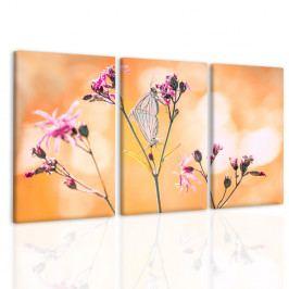 Obraz život přírody (120x80 cm) - InSmile ®