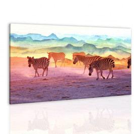 Obraz zebry v západu slunce (90x60 cm) - InSmile ®