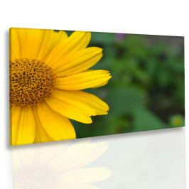 Obraz žlutý úsměv (90x60 cm) - InSmile ®