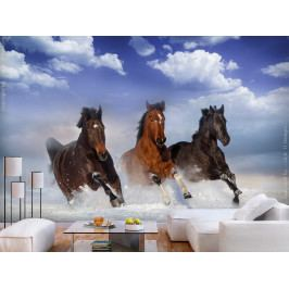 Fototapeta Koně v pohybu (200x140 cm) - Murando DeLuxe