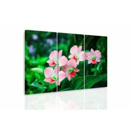 Vícedílný obraz - Orchidej v přírodě II. (90x60 cm) - InSmile ®