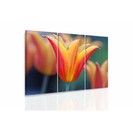 Vícedílný obraz - Tulipán (90x60 cm) - InSmile ®