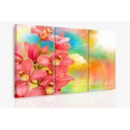 Vícedílný obraz - Orchidej a duha (90x60 cm) - InSmile ®