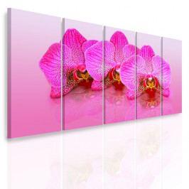 Vícedílný obraz - Růžové orchideje (150x70 cm) - InSmile ®