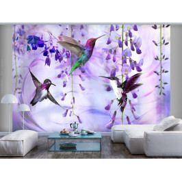 Tapeta létající kolibříci - fialová (150x105 cm) - Murando DeLuxe
