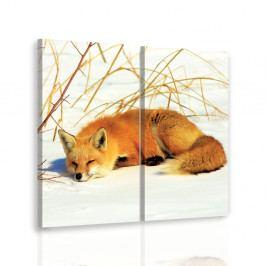 Vícedílný obraz - Spící liška (60x60 cm) - InSmile ®