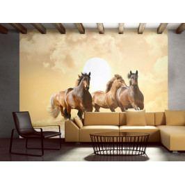*Tapeta koně v klusu (250x193 cm) - Murando DeLuxe