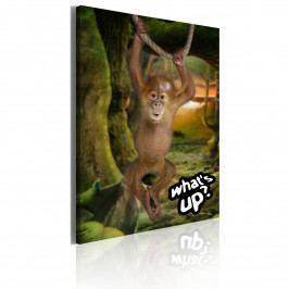 Malý opičák (50x70 cm) - Murando DeLuxe