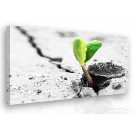 Obraz na plátně - pupen (90x60 cm) - InSmile ®