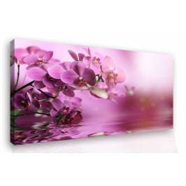 Obraz na zeď - orchidej (90x60 cm) - InSmile ®