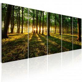 Pětidílný obraz - stín stromů (150x60 cm) - Murando DeLuxe