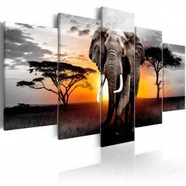 Pětidílné obrazy - slon v Africe II (180x90 cm) - Murando DeLuxe