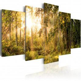Slunečný les (200x100 cm) - Murando DeLuxe
